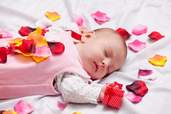 Little baby with rose petals Royalty Free Stock Images