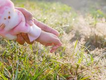 Little baby`s hand in her mother`s hand, for the first time, reaching out to touch dew drops on grasses in morning sunlight. Mother supports and helps her royalty free stock image