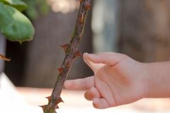 Little baby`s hand stinging by a thorn. stock photo