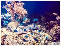 Underwater life fishes coral and blue color. Little baby shark swimming among blue fishes Stock Photo