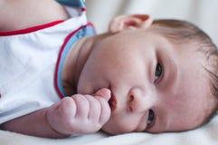 Little baby sucks his fist Royalty Free Stock Image