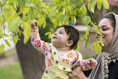 Little baby is touching fresh spring leaves in her mothers hug i. Little baby is touching fresh spring leaves in her mother`s hug in outdoor park area Stock Photo