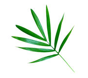 Little bamboo leaves isolated Stock Photo