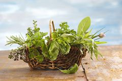 Little Basket of aromatic herbs Stock Photography