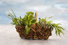 Little Basket of aromatic herbs Stock Photos
