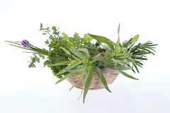Little Basket of aromatic herbs Stock Photo