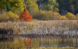 Kalamazoo River Bayou in Autumn stock photography