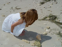 Little Beachcomber 1 royalty free stock image
