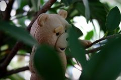 The little bear is going to find the leaves. royalty free stock photo