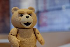 The little bear is looking at your face. royalty free stock images
