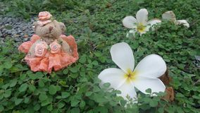Little bear in orange evening dress and plumeria flower lost in  green plant carpet Royalty Free Stock Image