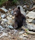 Little Bear Stock Image