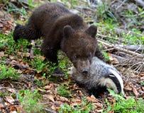 Little Bear Royalty Free Stock Photos