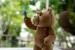 The little bear is videocall. stock photos