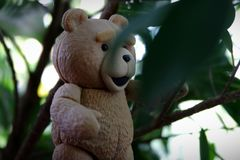 The little bear is going to find the leaves. royalty free stock images