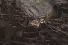 Little beasts around the city. Some snails living their life aorund us. So tiny living things Stock Images