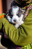 Little beautiful black and white shepherd puppy held on human shoulders Royalty Free Stock Photos