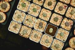 Little beautiful cactus on pot ,hipster tone Stock Photos