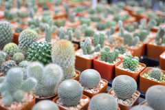 Little beautiful cactus on pot ,hipster tone Royalty Free Stock Images