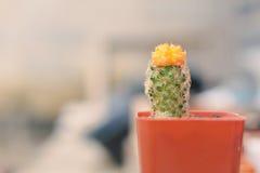 Little beautiful cactus  purple background Stock Image
