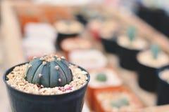 Little beautiful cactus  purple background Stock Images