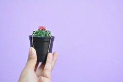 Little beautiful cactus  purple background Stock Photography