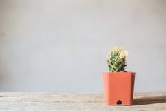 Little beautiful cactus wood background royalty free stock image