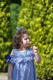 Little beautiful curly girl blowing on a dandelion. Little beautiful curly girl blowing on a dandelion in a park on a sunny day. Outdoors Stock Photo
