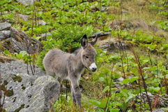 Beautiful little donkey up in the mountains Royalty Free Stock Photos