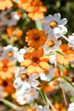 Little beautiful flowers Royalty Free Stock Photography