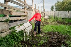 A little beautiful girl in a barnyard walks with a goat royalty free stock photography