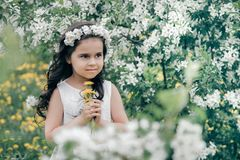 Little beautiful girl at blossom apple trees royalty free stock photo
