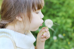 Little beautiful girl blows white dandelion Stock Photo