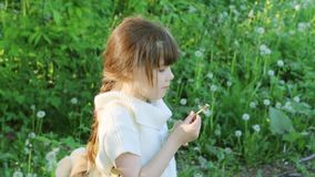 Little beautiful girl blows white dandelion stock video