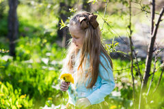 Little beautiful girl collects dandelions in the park among blossoming trees. The child with long hair holds in his hand a bouquet royalty free stock photo