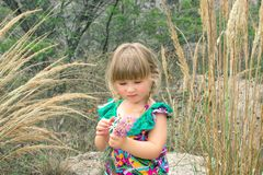 Little beautiful girl collects wild flowers. stock photo