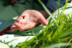 Little beautiful ladybug takes off from the palm of a child
