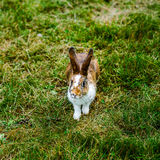 Little beautiful rabbit on green grass, farm mammals Stock Image