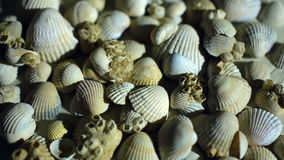 Little, beautiful sea shells with sand and back stock video