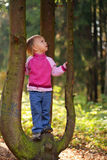 Little beauty girl on tree. In the autumn forest look up stock image