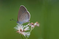 Little beauty. The soft color of little butterfly with flower Stock Photo