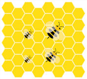 Little bee , little honey Stock Images