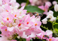 Little bee Royalty Free Stock Photo