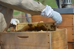 A little beekeeping royalty free stock image