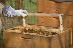 A little beekeeping stock image