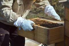 A little beekeeping royalty free stock photos