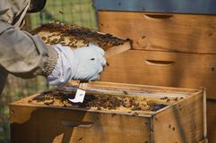 A little beekeeping stock photos