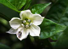 Little beetle on a flower Stock Photo