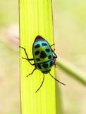 Little beetle Stock Photography