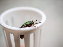 Little beetles Royalty Free Stock Photo